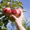 Alimenti biologici: cosa sono