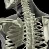 La Metodica Lionese: riabilitazione della spalla